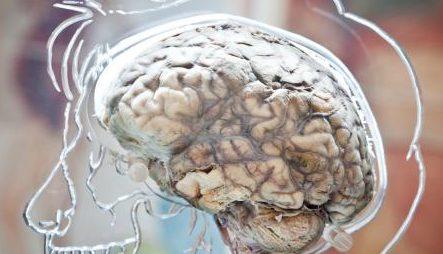 real-brain_0